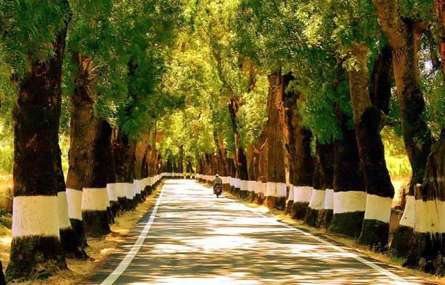 estrada mais bonita do Alentejo